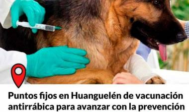Huanguelén: vacunación antirrábica gratuita⠀