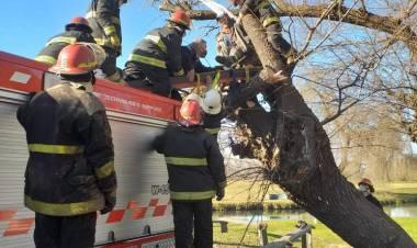 Accidente con un árbol caído en el balneario municipal Samuel Davis