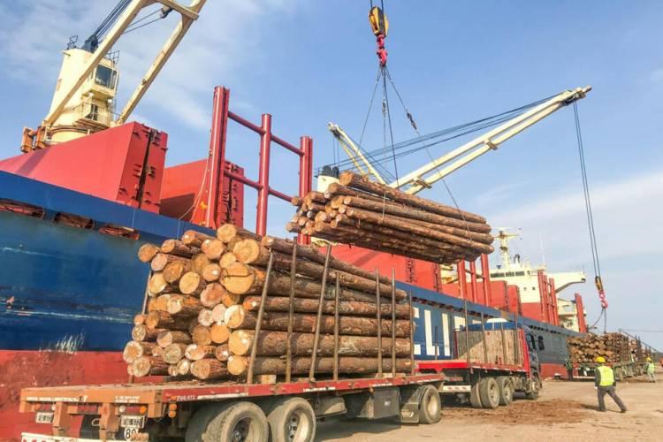 China es un importante comprador de madera argentina